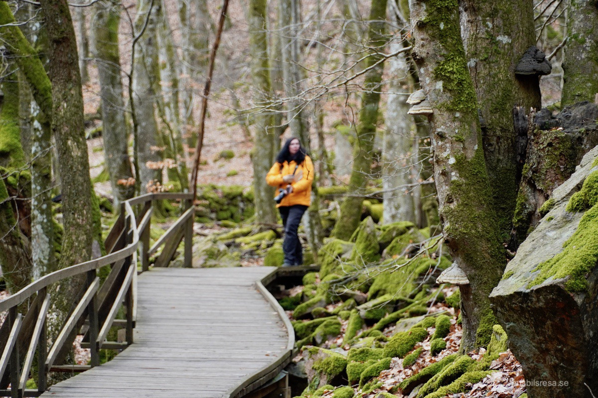 Söderåsens nationalpark - Kopparhatten